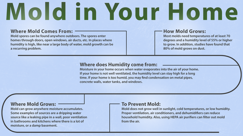 Mold In Your Home Chart